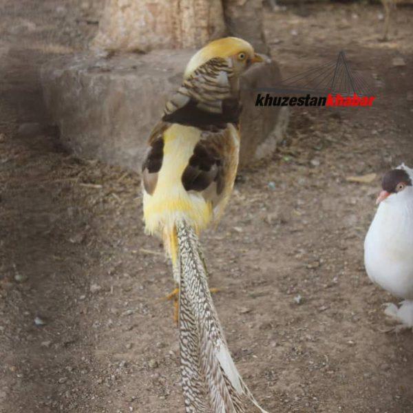 باغ وحش دزفول