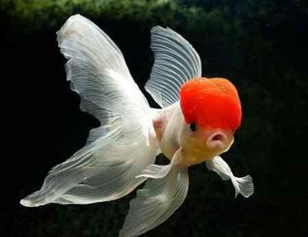 تحقیق درباره ی غذای ماهی ها